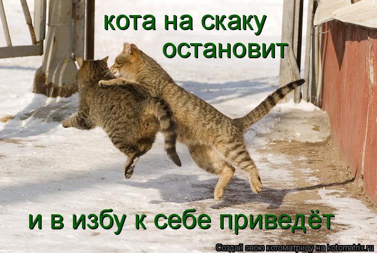 кота  на скаку  остановит и визбу к себе приведёт