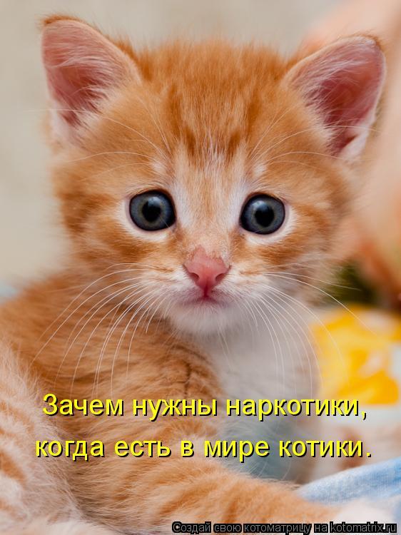 Котоматрица: Зачем нужны наркотики, когда есть в мире котики.