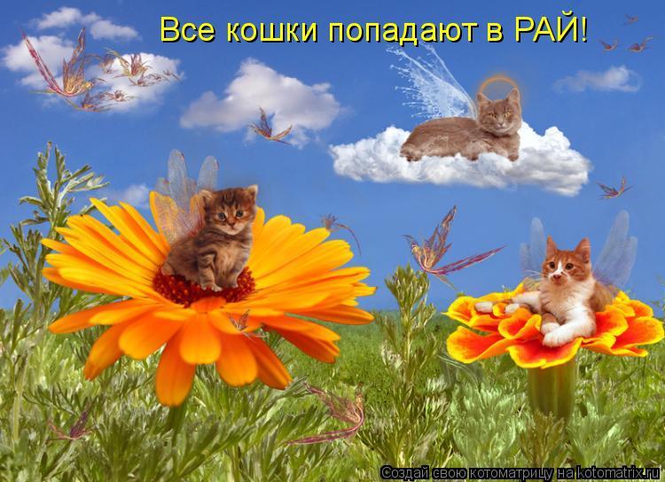 Котоматрица: Все кошки попадают в РАЙ!