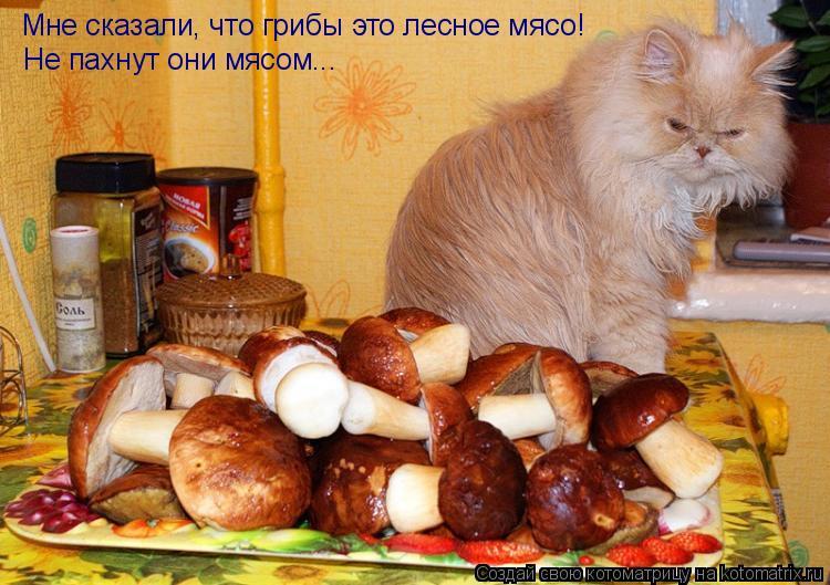 Котоматрица: Мне сказали, что грибы это лесное мясо! Не пахнут они мясом...