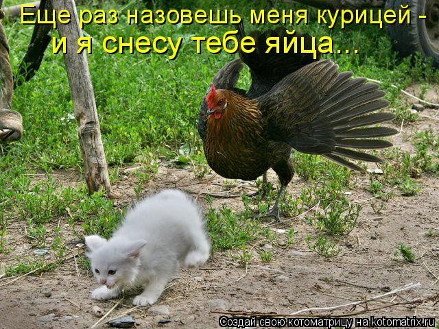 Котоматрица: Еще раз назовешь меня курицей -  и я снесу тебе яйца...