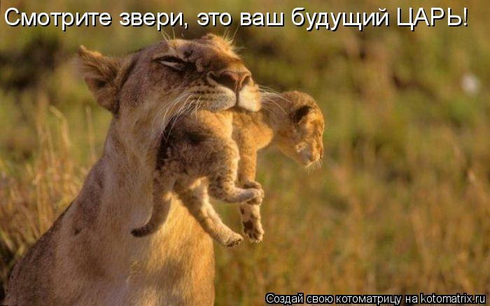 Котоматрица: Смотрите звери, это ваш будущий ЦАРЬ!