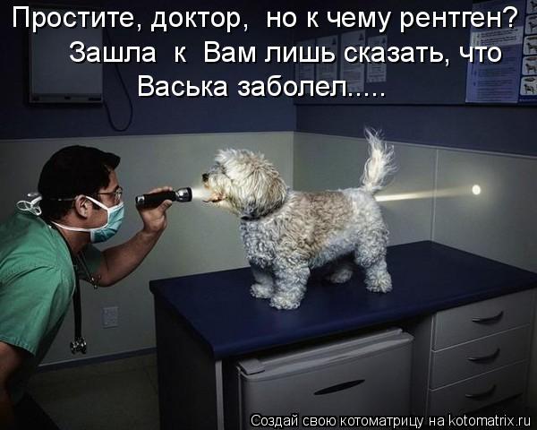 Котоматрица: Простите, доктор,  но к чему рентген? Зашла  к  Вам лишь сказать, что    Васька заболел…....