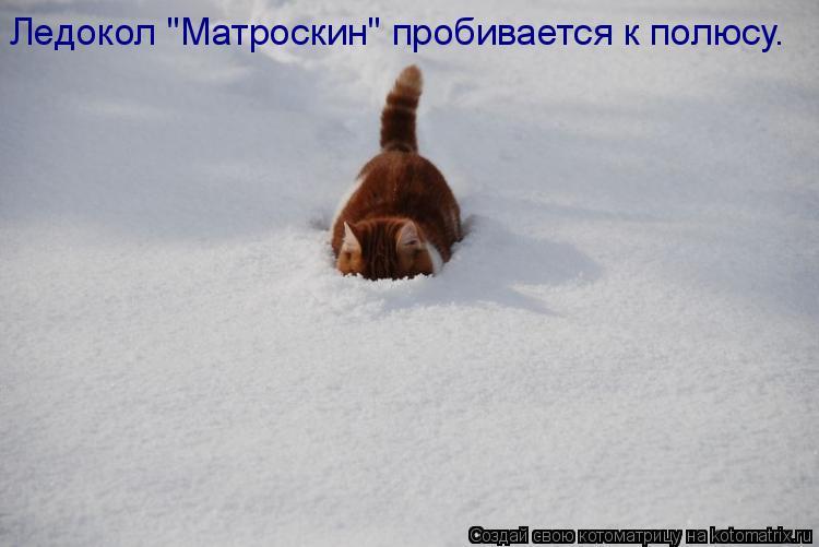 """Котоматрица: Ледокол """"Матроскин"""" пробивается к полюсу."""
