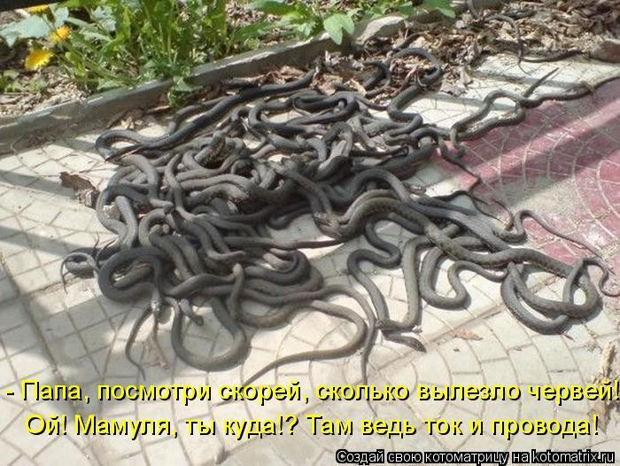Котоматрица: - Папа, посмотри скорей, сколько вылезло червей! Ой! Мамуля, ты куда!? Там ведь ток и провода!