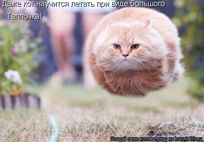 Котоматрица: Даже кот научится летать при виде большого Таппочка!