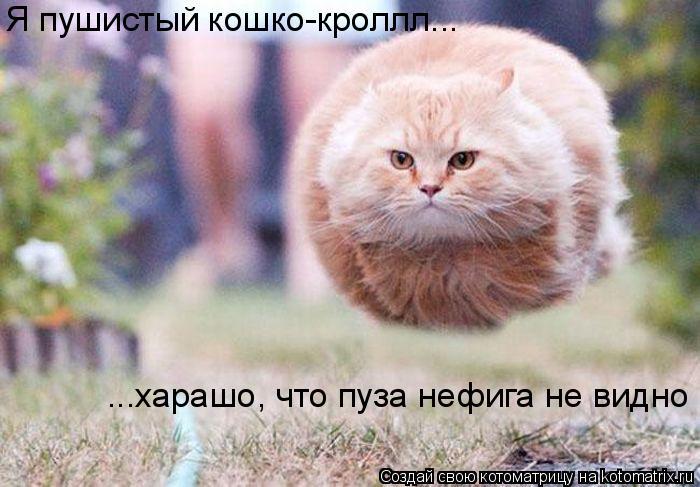 Котоматрица: Я пушистый кошко-кроллл... ...харашо, что пуза нефига не видно