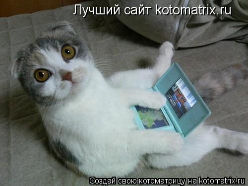 Котоматрица: Лучший сайт kotomatrix.ru