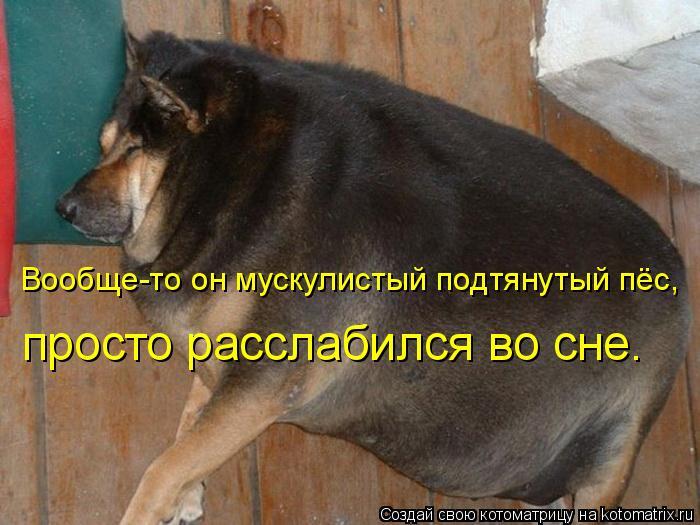 Котоматрица: Вообще-то он мускулистый подтянутый пёс,  просто расслабился во сне.