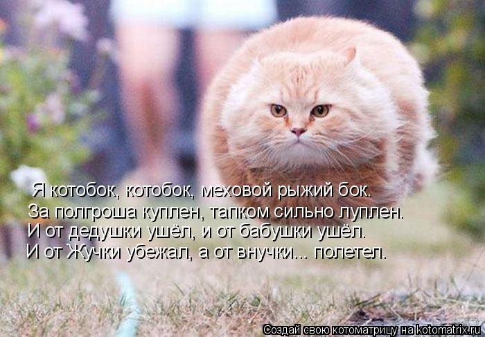 Котоматрица: Я котобок, котобок, меховой рыжий бок. За полгроша куплен, тапком сильно луплен. И от дедушки ушёл, и от бабушки ушёл. И от Жучки убежал, а от в