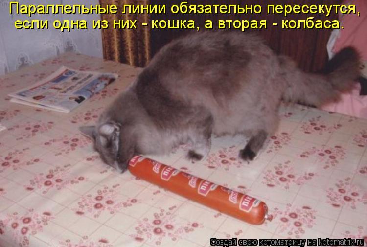 Котоматрица: Параллельные линии обязательно пересекутся,  если одна из них - кошка, а вторая - колбаса.