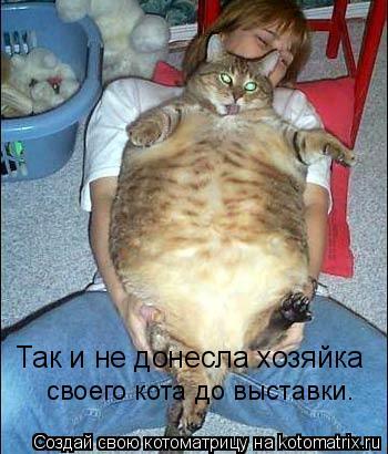 Котоматрица: Так и не донесла хозяйка  своего кота до выставки.