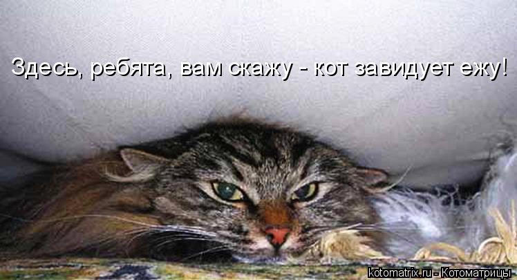 Котоматрица: Здесь, ребята, вам скажу - кот завидует ежу!