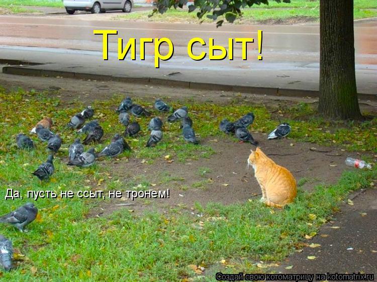 Котоматрица: Тигр сыт! Да, пусть не ссыт, не тронем!