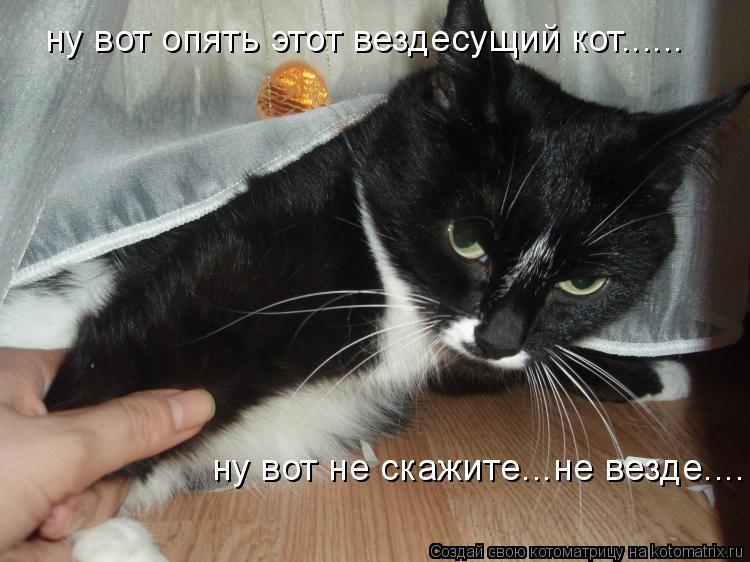 Котоматрица: ну вот опять этот вездесущий кот...... ну вот не скажите...не везде....