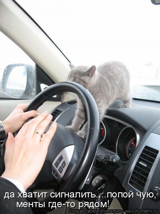 Котоматрица: да хватит сигналить....попой чую, менты где-то рядом!