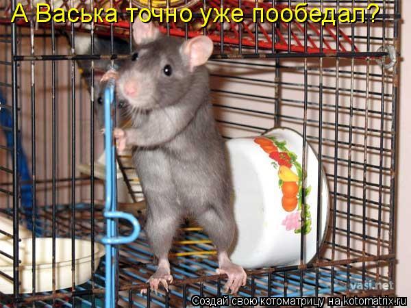 Котоматрица: А Васька точно уже пообедал?