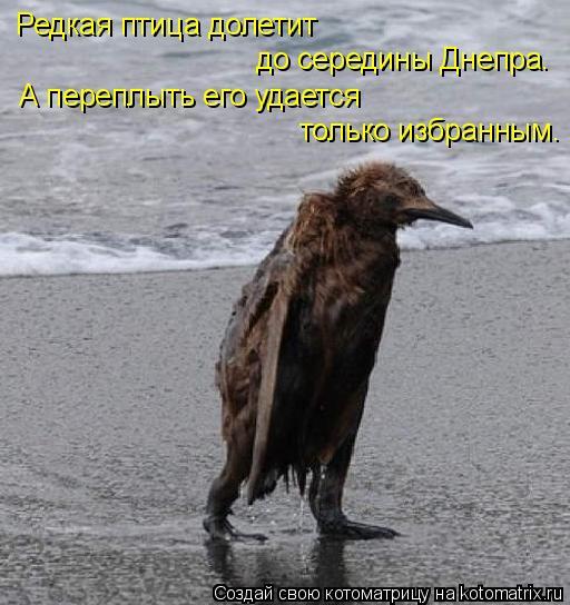 Котоматрица: Редкая птица долетит до середины Днепра. А переплыть его удается только избранным.