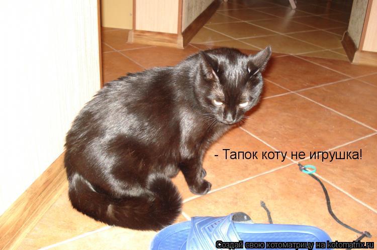 Котоматрица: - Тапок коту не игрушка!