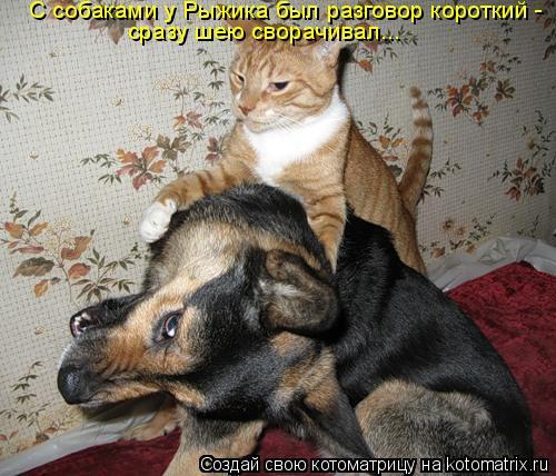 Котоматрица: С собаками у Рыжика был разговор короткий -  сразу шею сворачивал...