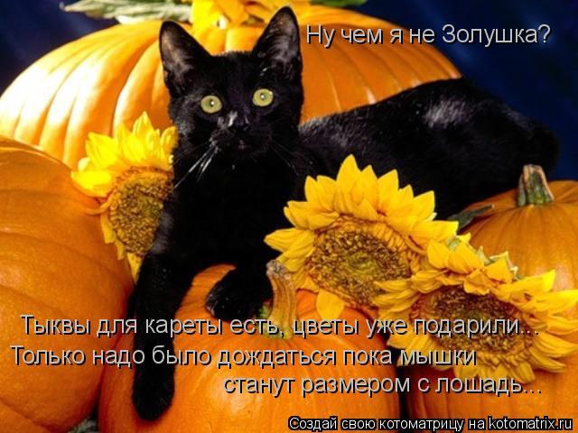 Котоматрица: Ну чем я не Золушка? Тыквы для кареты есть, цветы уже подарили... Только надо было дождаться пока мышки станут размером с лошадь...