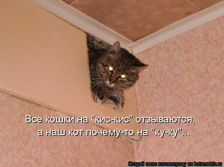 """Котоматрица: Все кошки на """"кис-кис"""" отзываются, а наш кот почему-то на """"ку-ку""""..."""