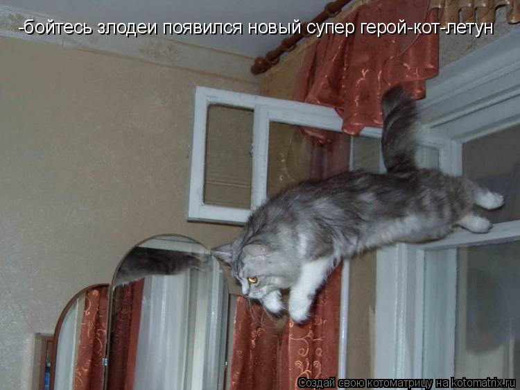 Котоматрица: -бойтесь злодеи появился новый супер герой-кот-летун