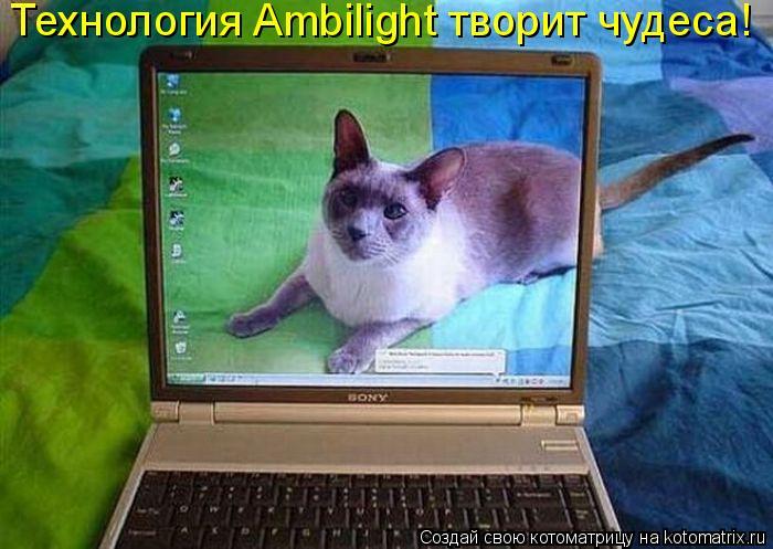 Котоматрица: Технология Ambilight творит чудеса!