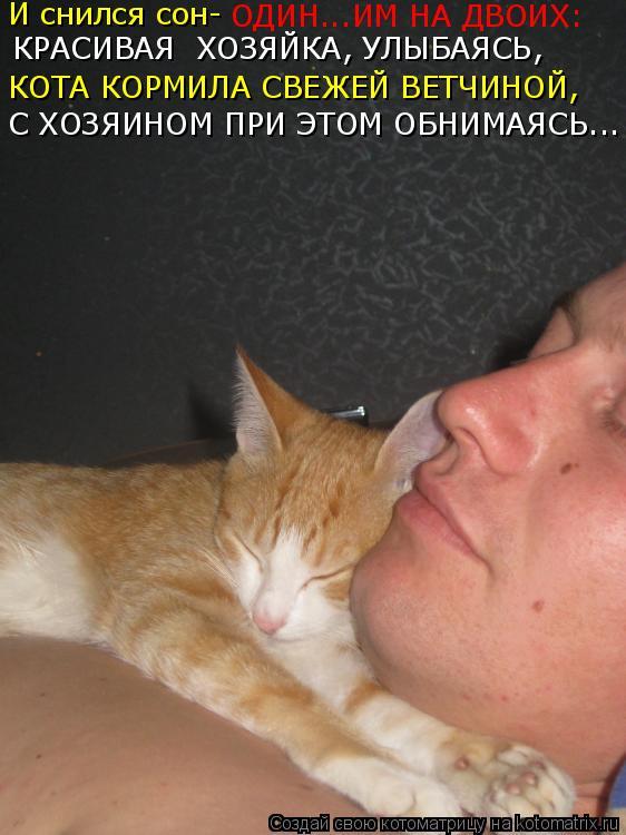 увидел кота вот сне к чему это игра своего