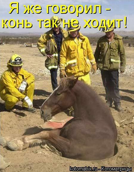 Котоматрица: Я же говорил -  конь так не ходит!