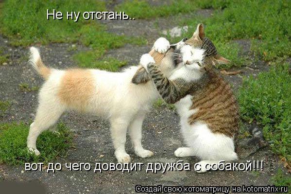 Котоматрица: Не ну отстань.. вот до чего доводит дружба с собакой!!!
