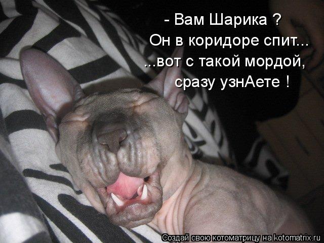 Он в  коридоре спит... - ВамШарика ? ...вот с такой мордой, сразуузнАете !