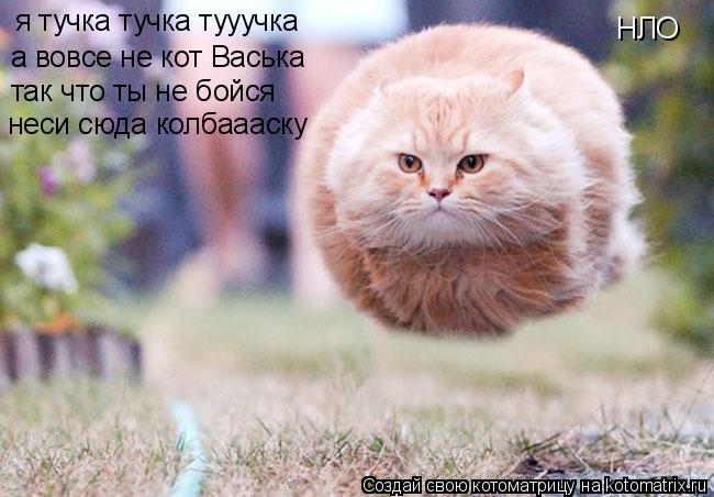 Кот нло
