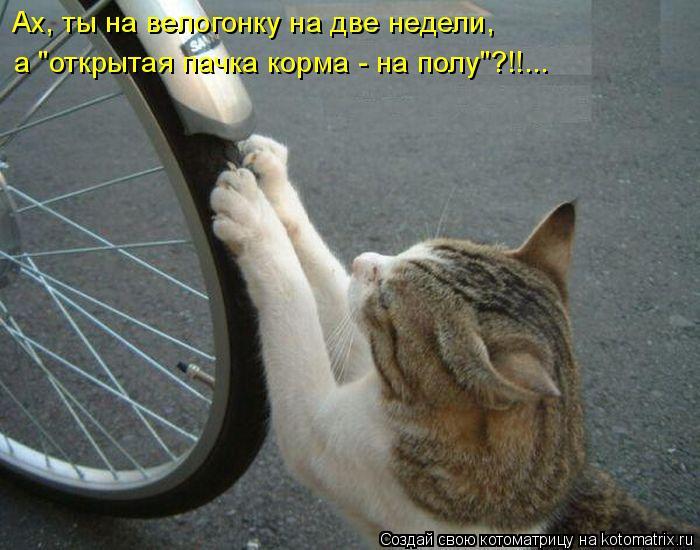 "Котоматрица: Ах, ты на велогонку на две недели, а ""открытая пачка корма - на полу""?!!..."