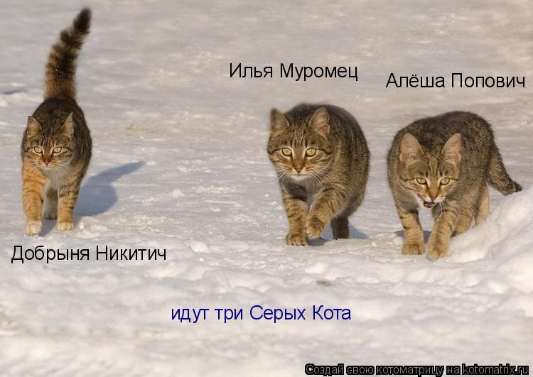 Котоматрица: Илья Муромец Добрыня Никитич Алёша Попович идут три Серых Кота