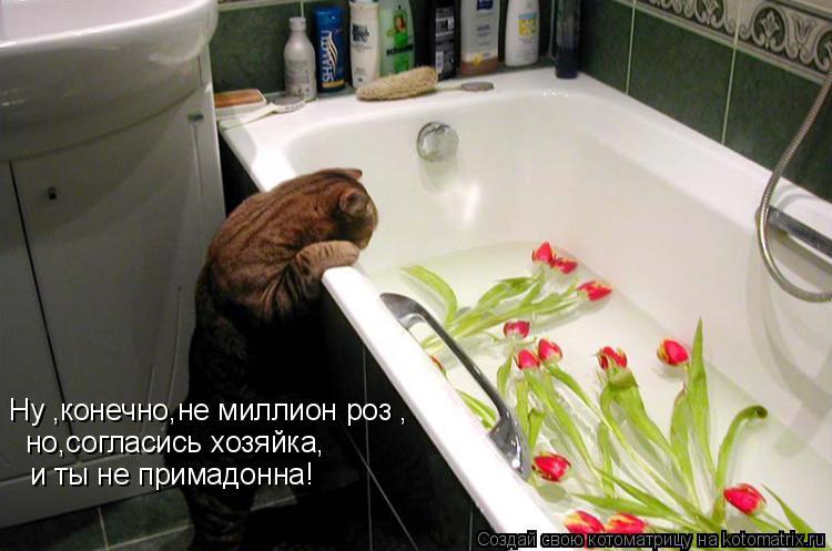 Котоматрица: Ну ,конечно,не миллион роз , но,согласись хозяйка, и ты не примадонна!