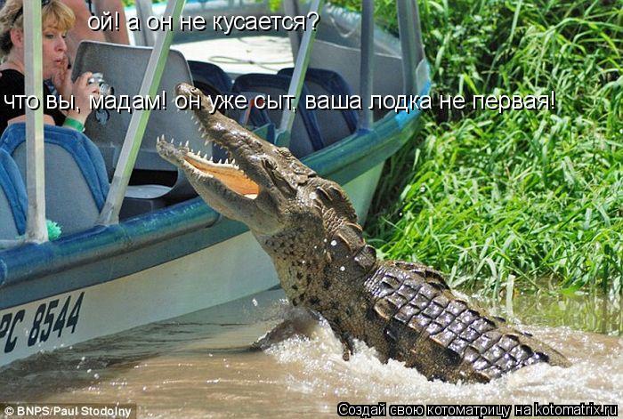 Котоматрица: ой! а он не кусается? что вы, мадам! он уже сыт, ваша лодка не первая!