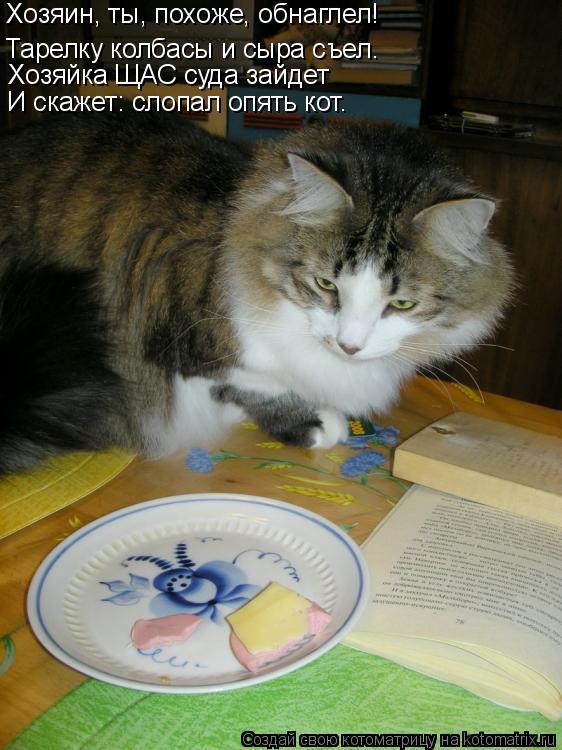 Котоматрица: Хозяин, ты, похоже, обнаглел! Тарелку колбасы и сыра съел… Хозяйка ЩАС суда зайдет И скажет: слопал опять кот.