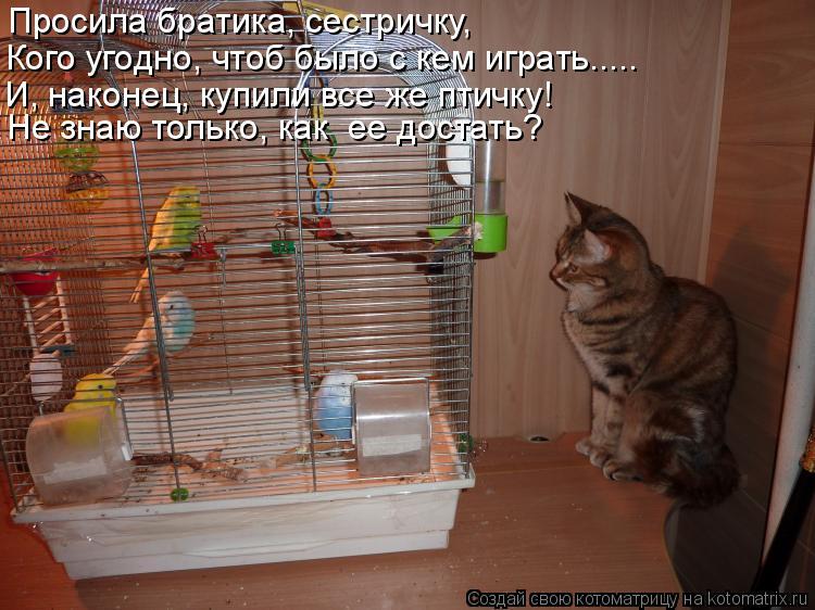 Котоматрица: Просила братика, сестричку, Кого угодно, чтоб было с кем играть..... И, наконец, купили все же птичку! Не знаю только, как  ее достать?