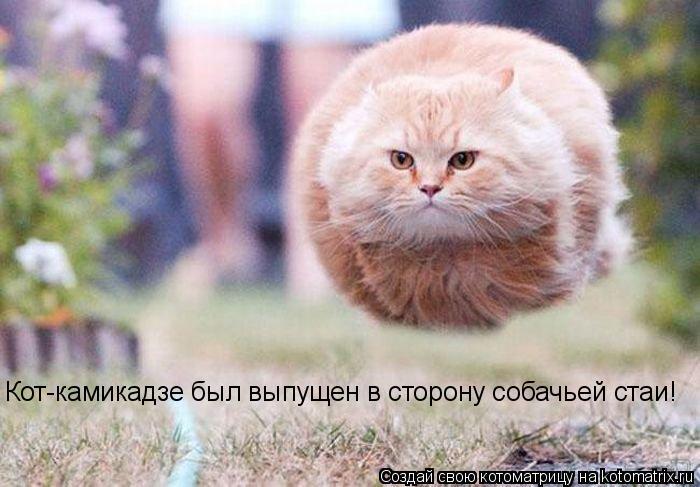Котоматрица: Кот-камикадзе был выпущен в сторону собачьей стаи!