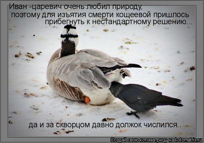 Котоматрица: Иван -царевич очень любил природу, поэтому для изъятия смерти кощеевой пришлось прибегнуть к нестандартному решению... да и за скворцом дав