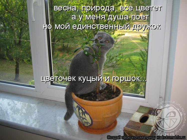 Котоматрица: весна, природа, все цветет а у меня душа поет но мой единственный дружок цветочек куцый и горшок...