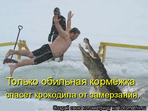 Котоматрица: Только обильная кормёжка  спасет крокодила от замерзания.