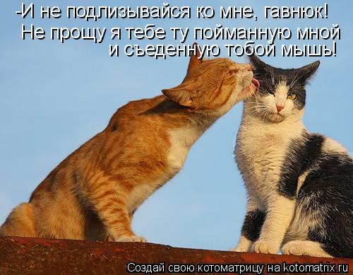 Котоматрица: -И не подлизывайся ко мне, гавнюк!  Не прощу я тебе ту пойманную мной  и съеденную тобой мышь!