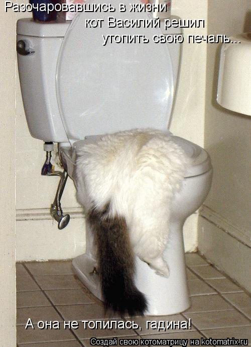Котоматрица: Разочаровавшись в жизни кот Василий решил  утопить свою печаль... А она не топилась, гадина!