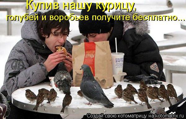 Котоматрица: Купив нашу курицу,  голубей и воробьев получите бесплатно...