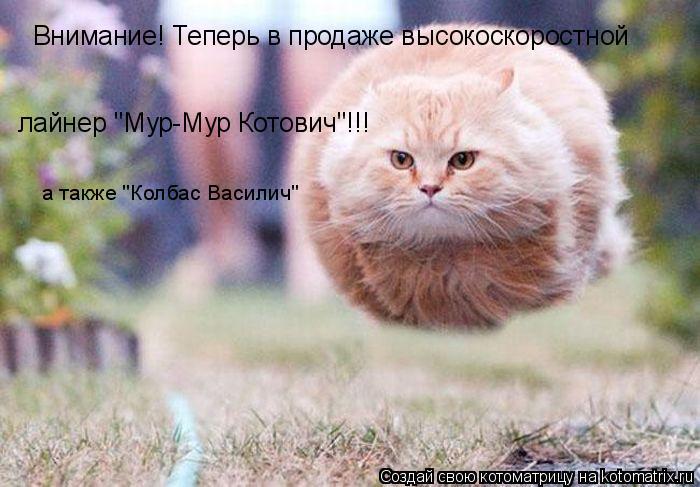 """Котоматрица: Внимание! Теперь в продаже высокоскоростной лайнер """"Мур-Мур Котович""""!!! а также """"Колбас Василич"""""""
