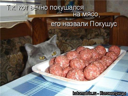 Котоматрица: Т.к. кот вечно покушался на мясо его назвали Покушус ,