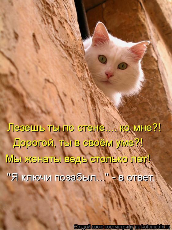 """Котоматрица: Лезешь ты по стене.... ко мне?!  Дорогой, ты в своём уме?! Мы женаты ведь столько лет! """"Я ключи позабыл..."""" - в ответ."""