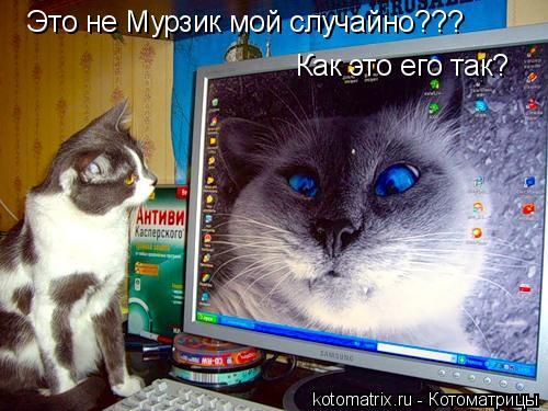 Котоматрица: Это не Мурзик мой случайно??? Как это его так?